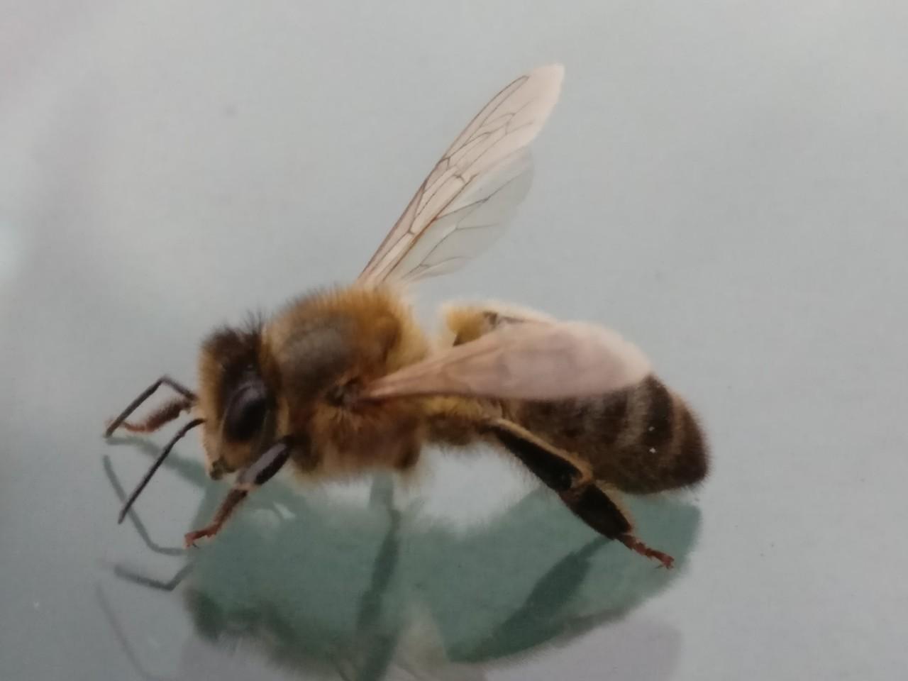 bee-on-water.jpg