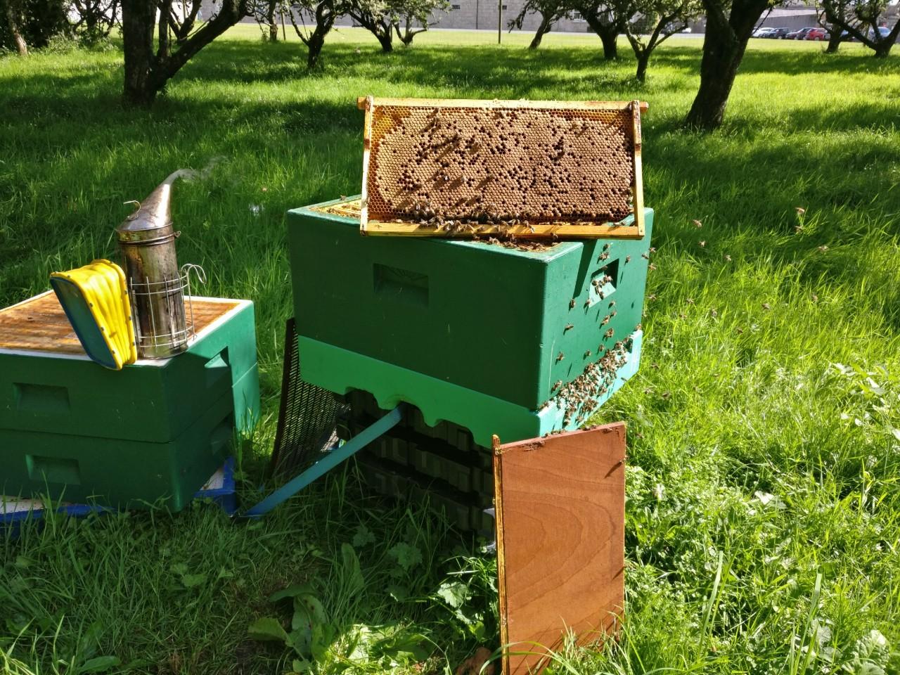 hives-at-work.jpg