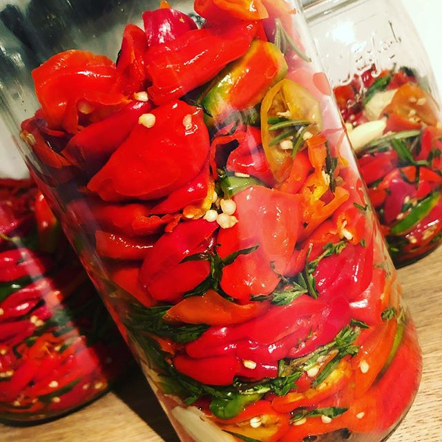 Fermented chilli sauce in the making round 2 hoping this one will be even more banging that the first!!! #chilli #fermentation #hot #spicy #chillisauce #scotchbonnets #theboomting