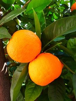 orangeswithleaves-1.jpg