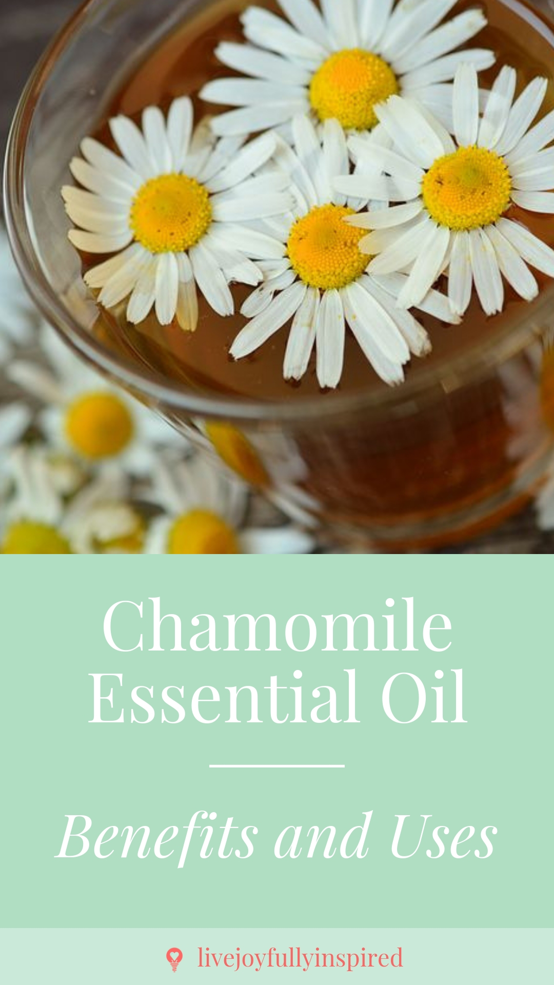 Chamomile Essential Oil. Known all over the world as a relaxing tea, Chamomile has so much more to offer than just being a delicious herbal drink. It's great for headaches, backaches, and insect bites #chamomileessentialoil #headacherelief #insectrepellent
