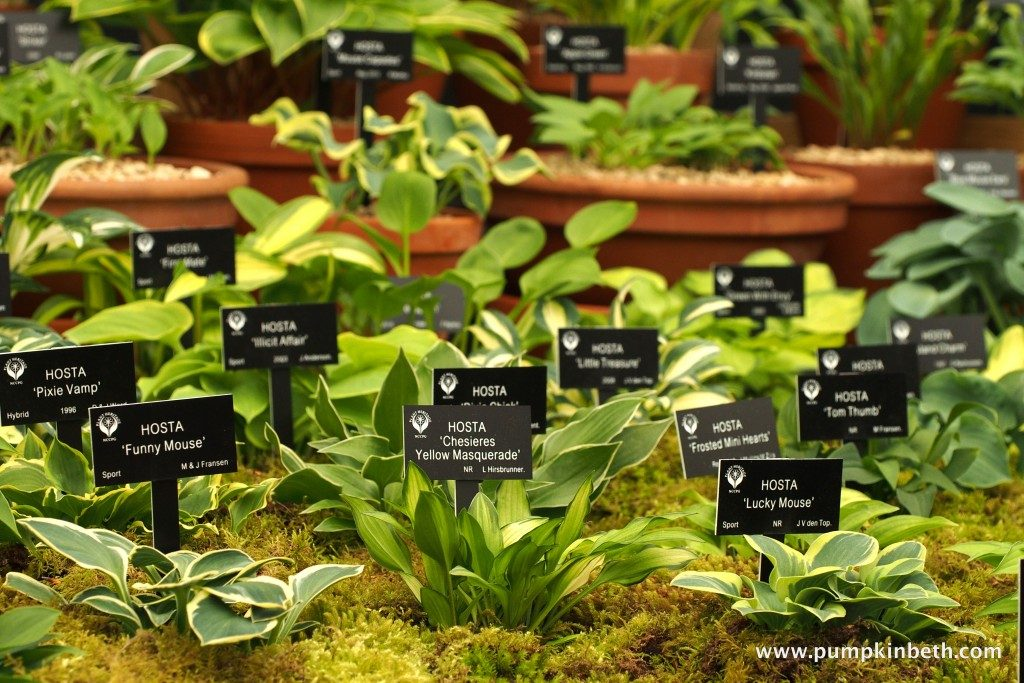 One of Hogarth Hosta's many winning displays