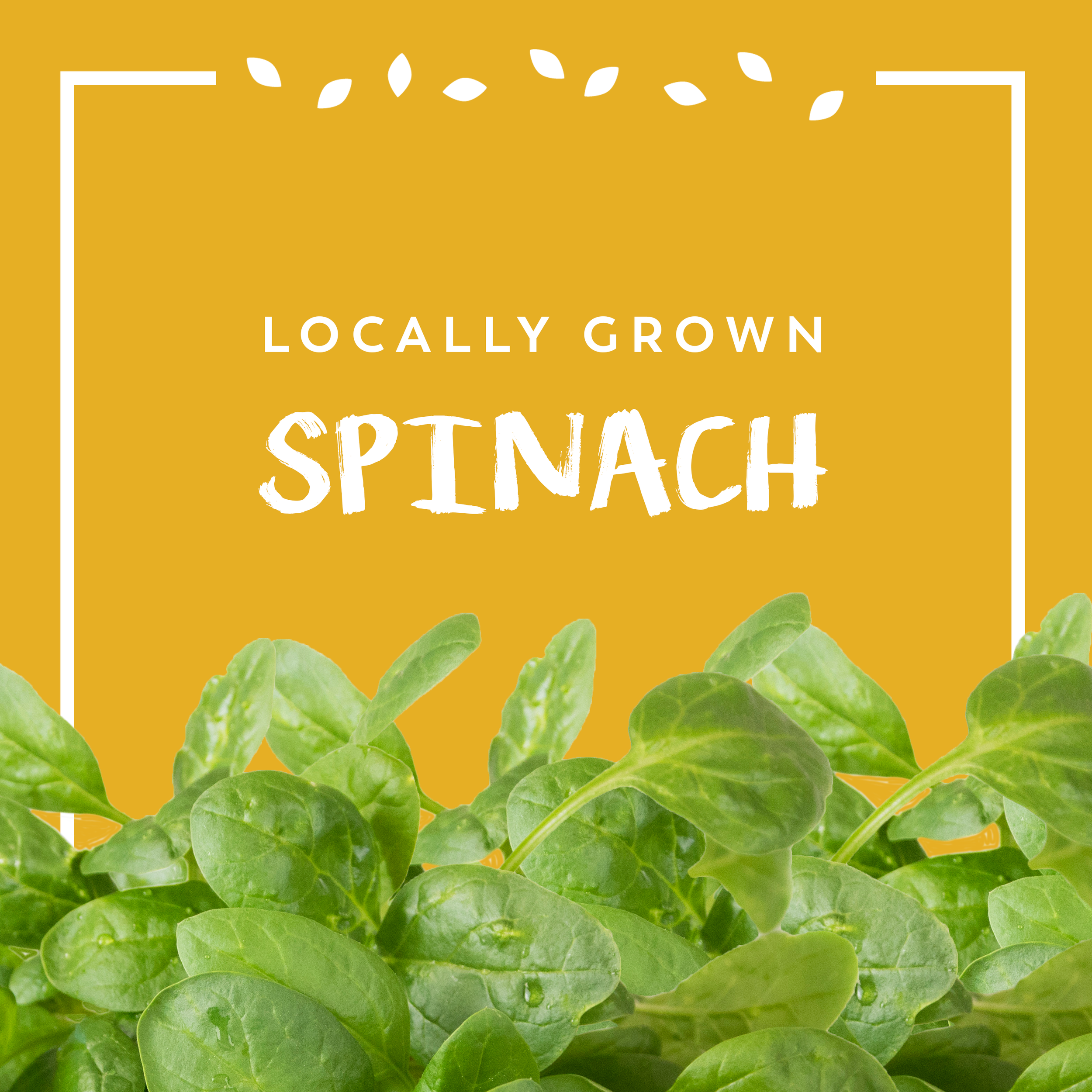 Spinach Promo.png
