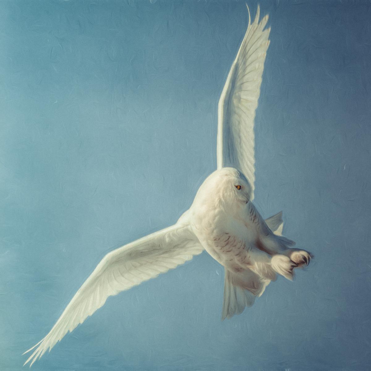 BIRDS - FINE ART - Coming Soon