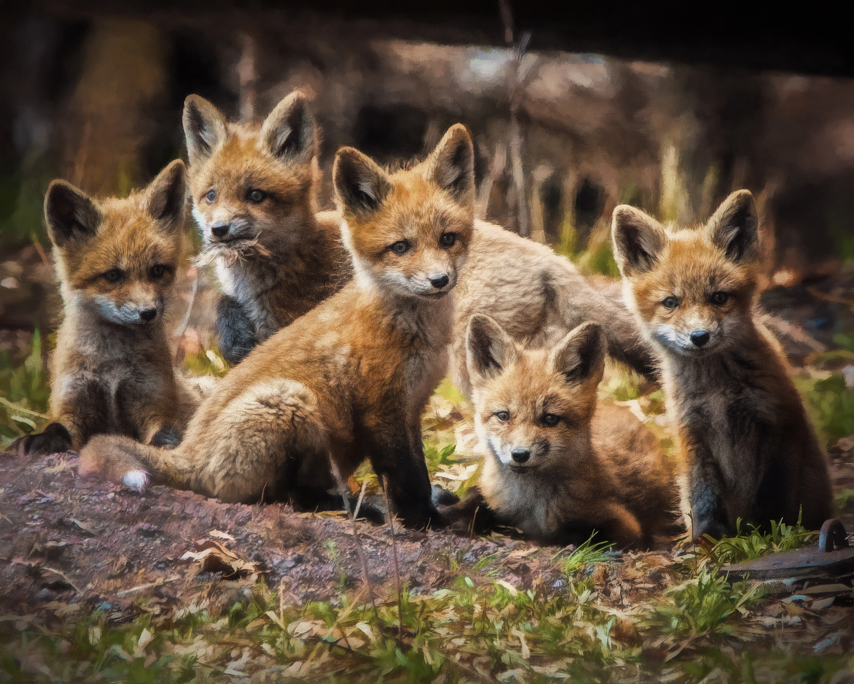 wildlife - Coming Soon