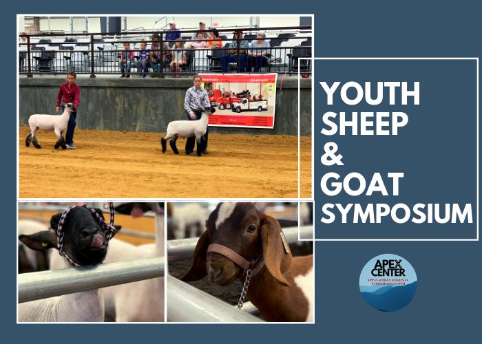 sheep & goats blog.png