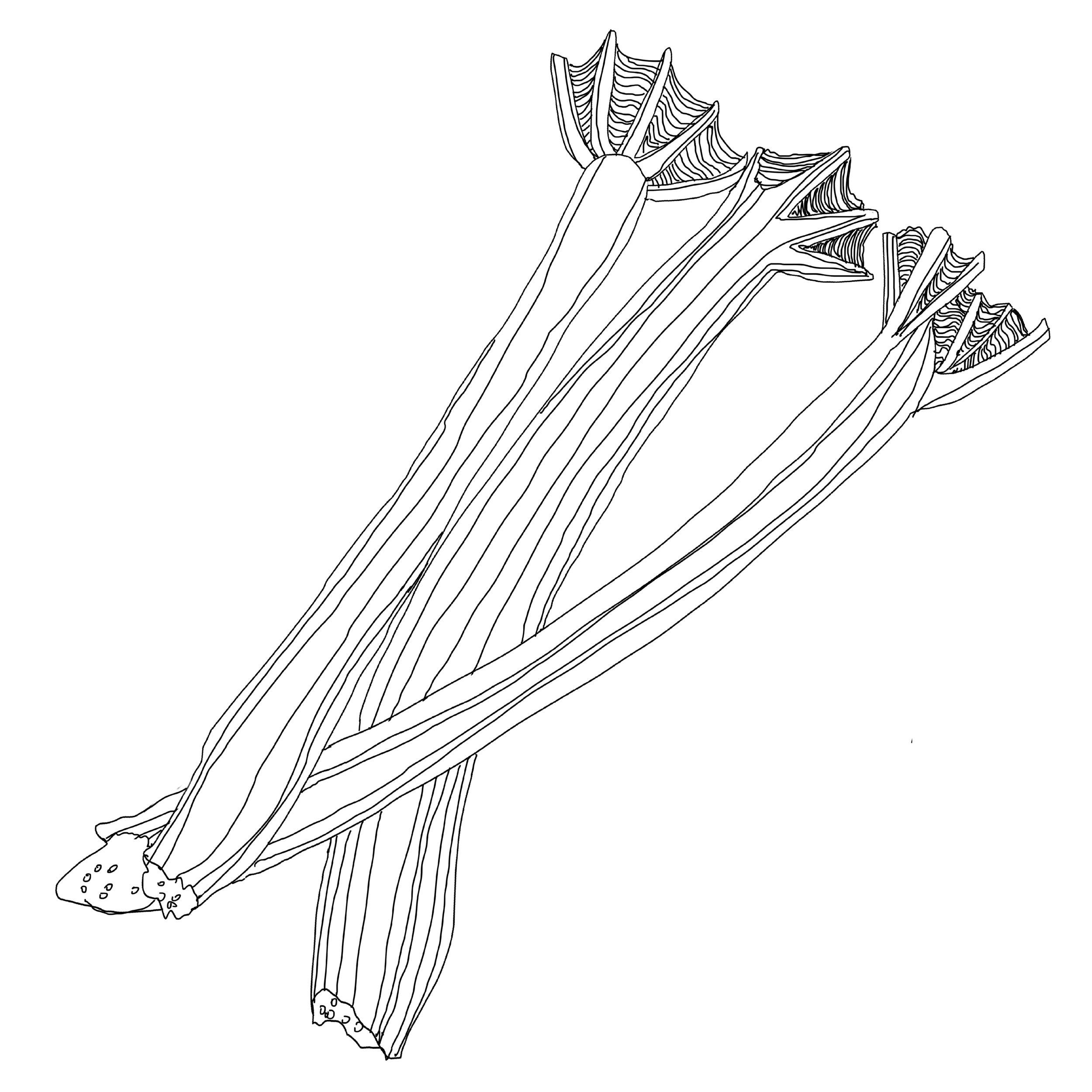 6. Rhubarb_Jessie Kanelos Weiner_Comestible.jpg