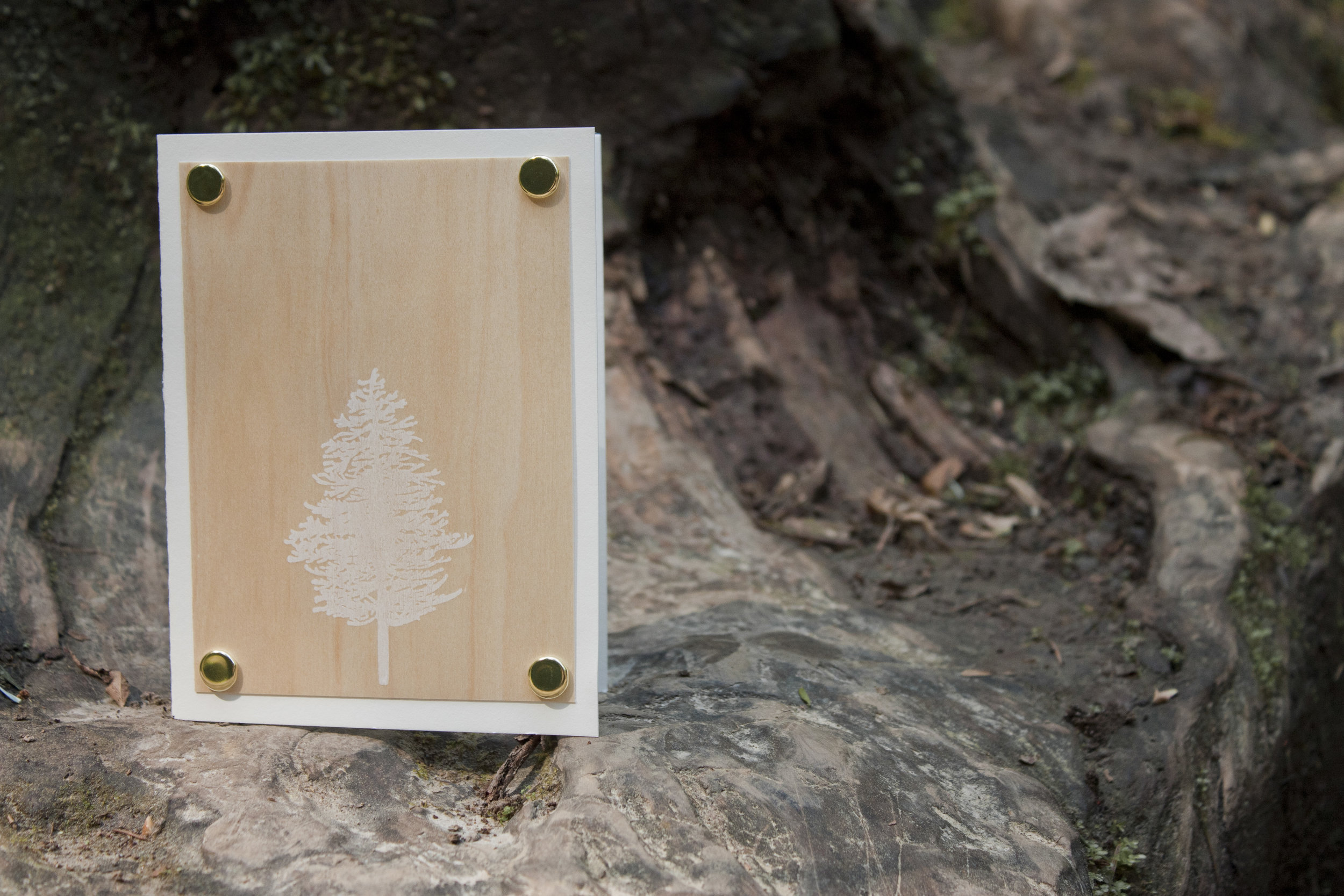 Doug Fir Greeting Card