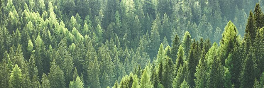 Banner_FINAL_Trees.jpg