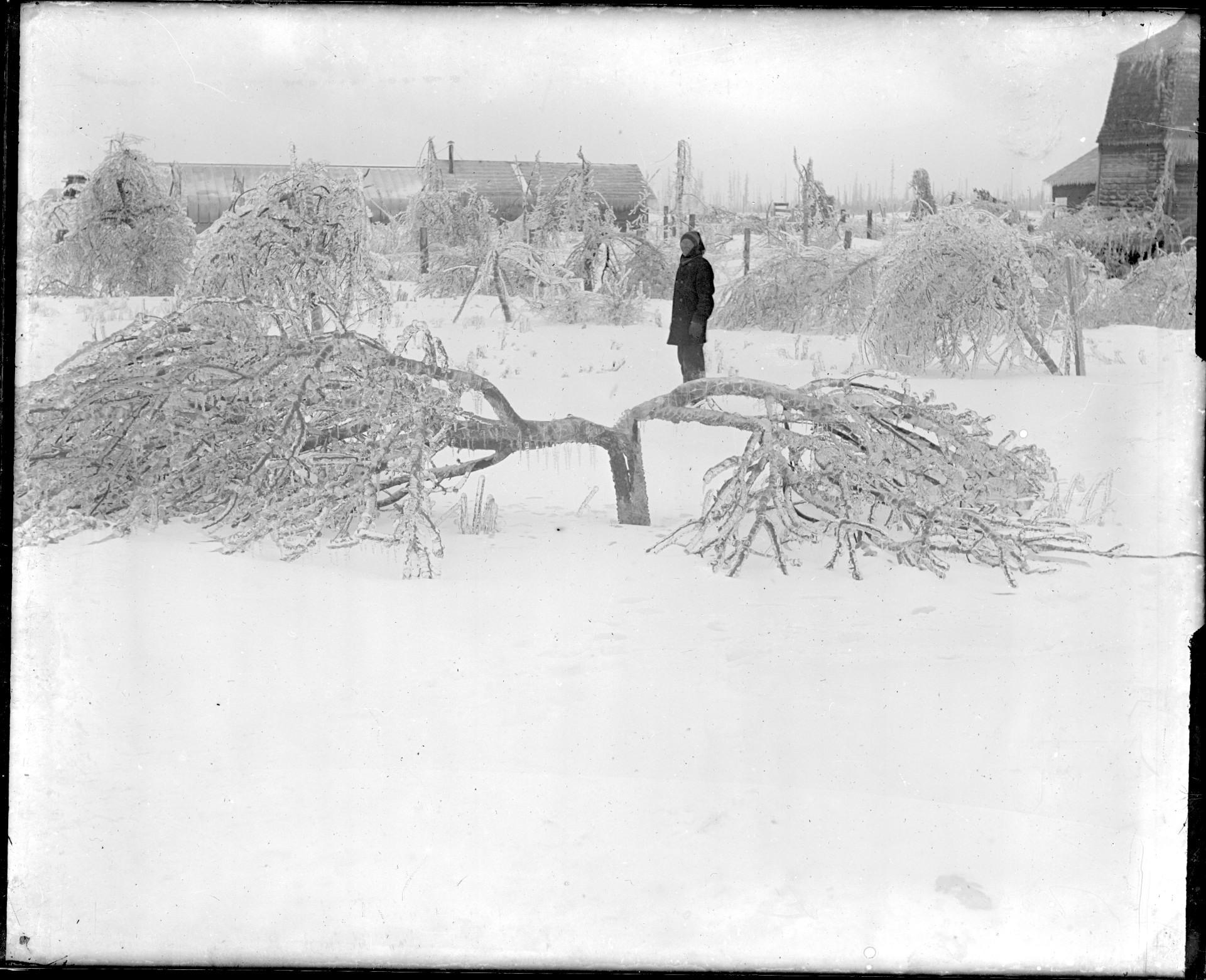 broken trees.jpg