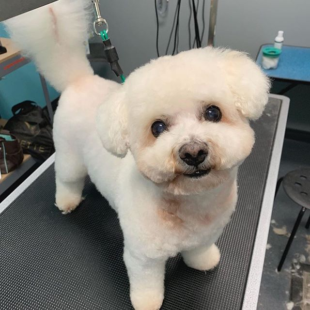 For everyone who has asked for Busters groomer, here she is @groomingbyjames 💜🥳 There's only 2 people Buster will willing go with without me. His dog walker @gigiversace and his groomer @groomingbyjames 🐶