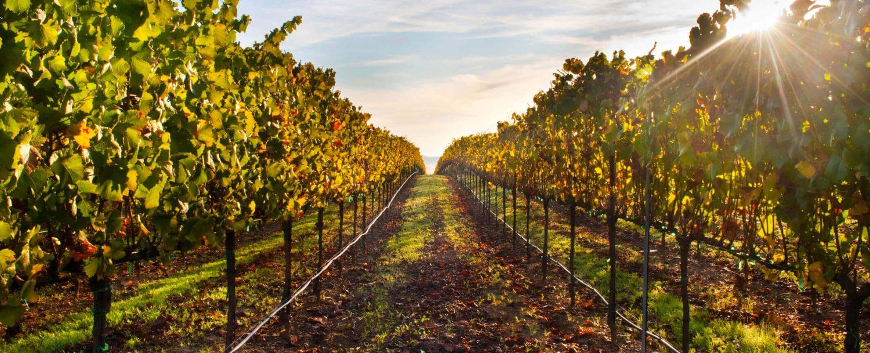 best-things-to-do-in-healdsburg-california-wineries-1500x609.jpg