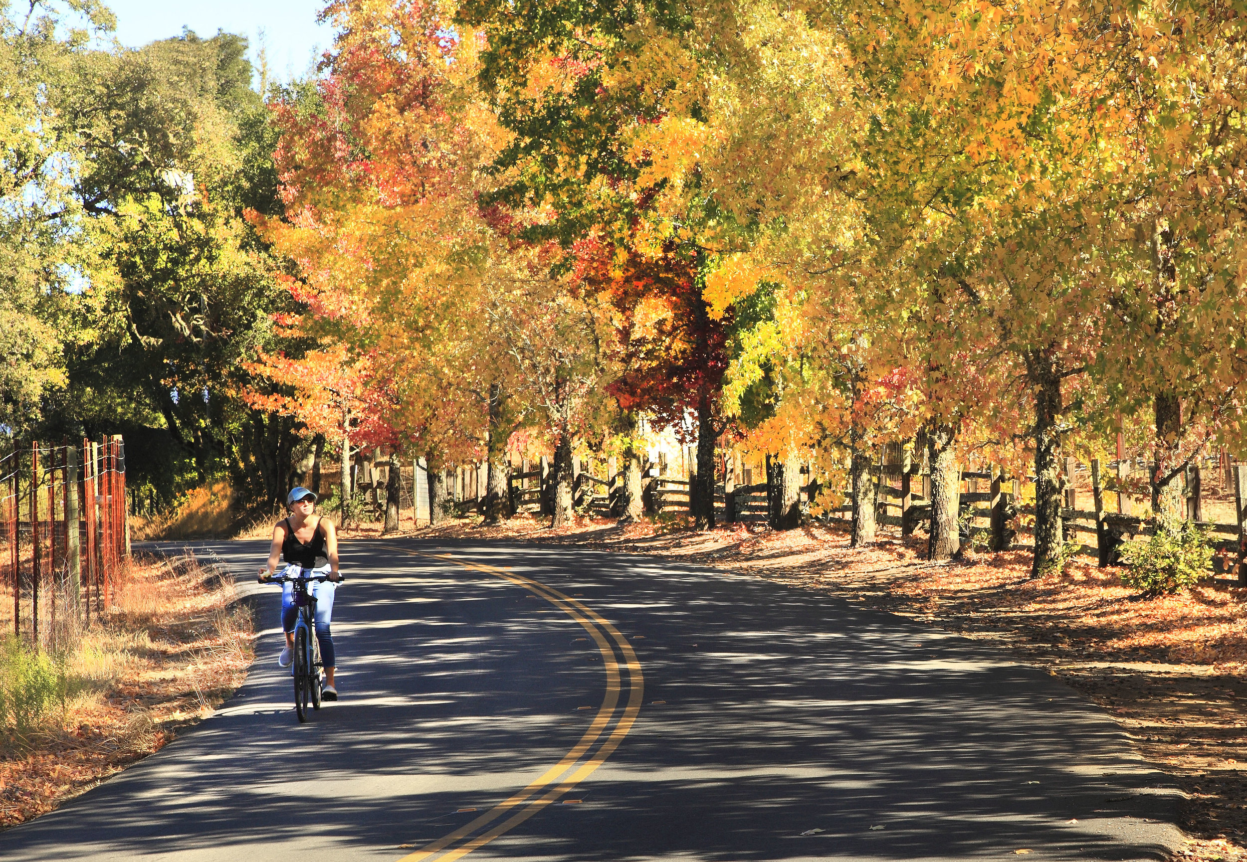 healdsburg fall road.jpg