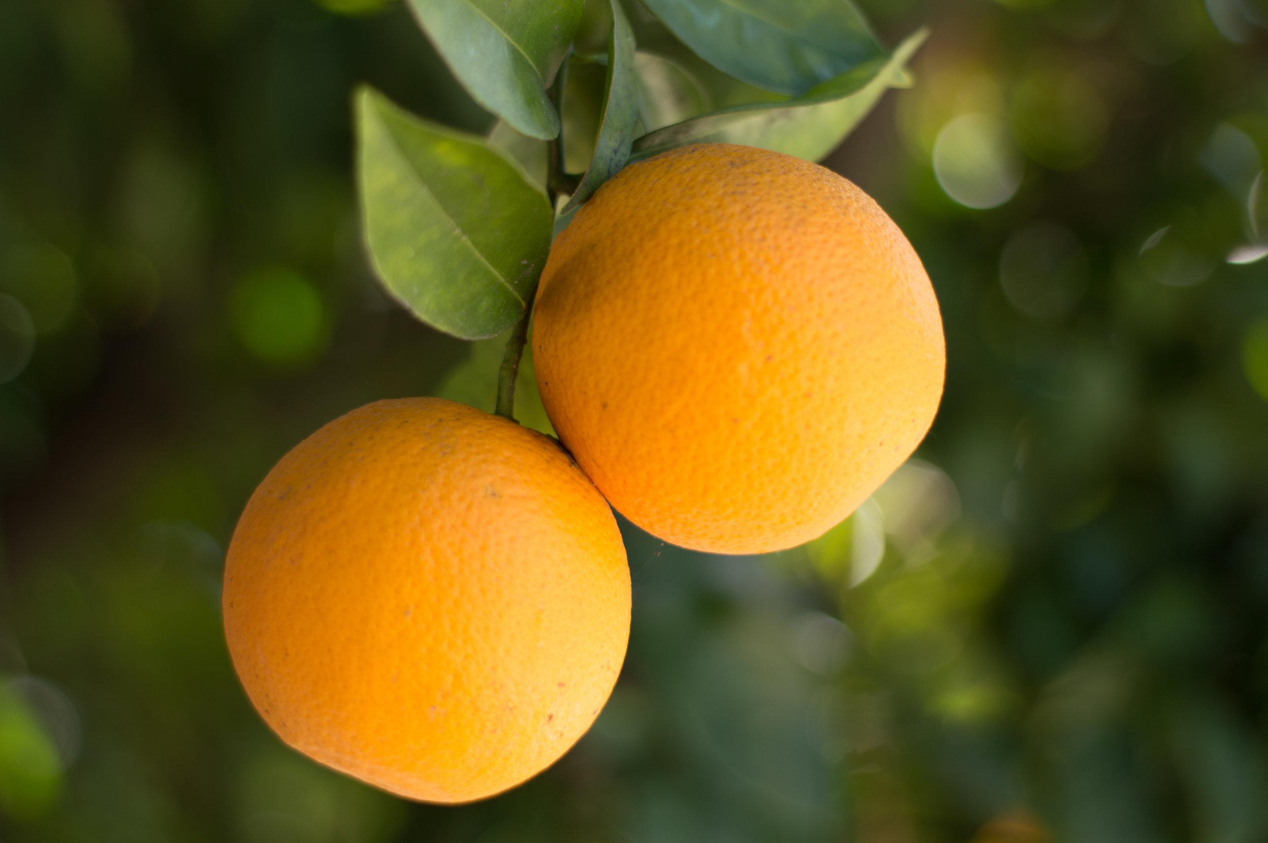 Oranges-.jpg