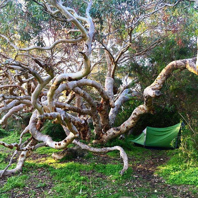 Slept under a magical old tree last night 💫 soo many precious native wildflowers today ❤️