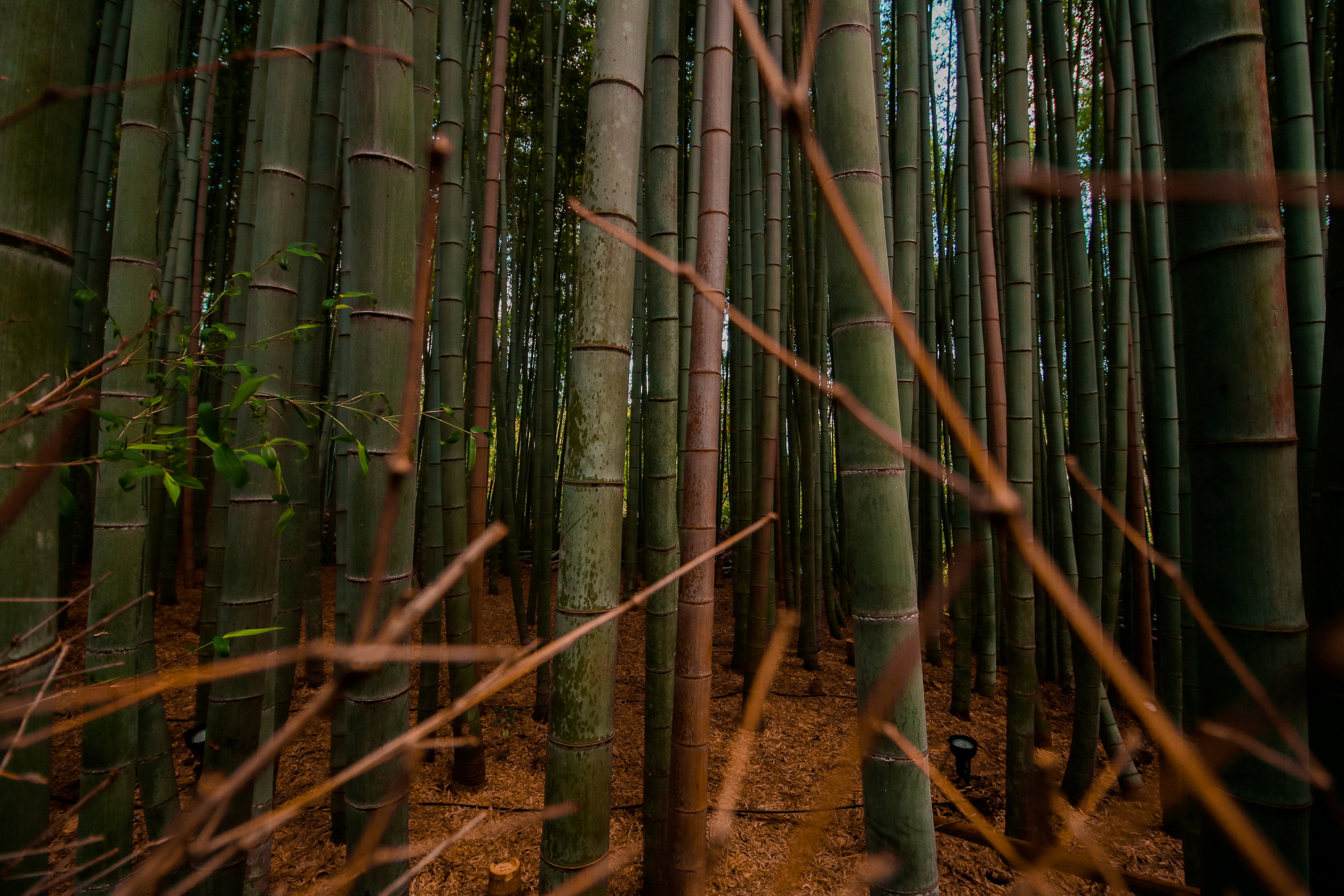 Bamboo-Lyocell