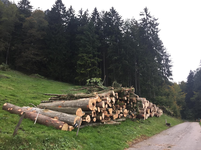Korporation Hergiswil Holzschlag Tellenpfad Oktober 20151.JPG
