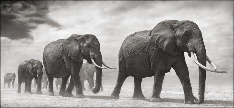 Photography by  Nick Brandt