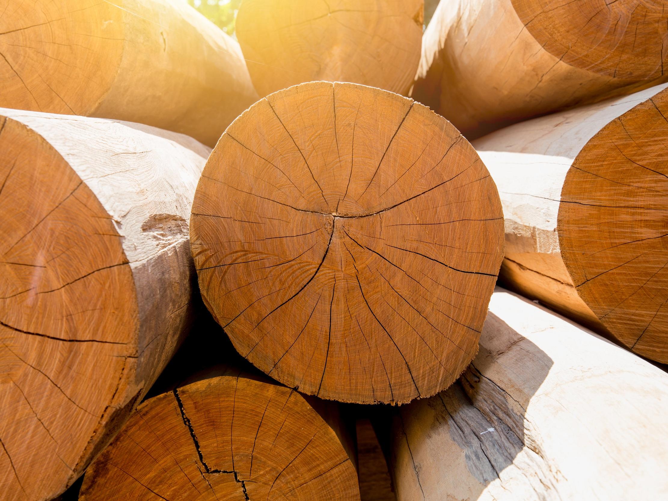 Waste timber disposal