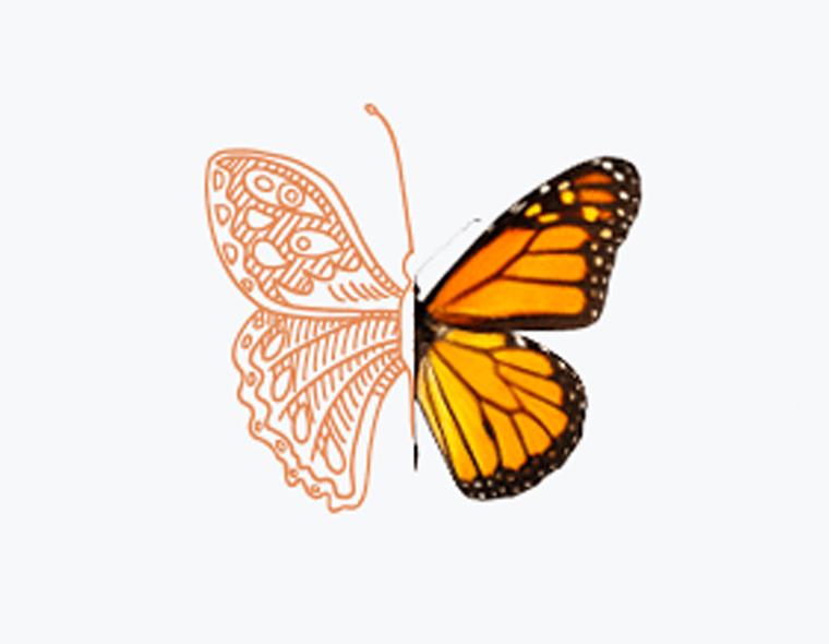 Occumen_Butterfly_760.jpg