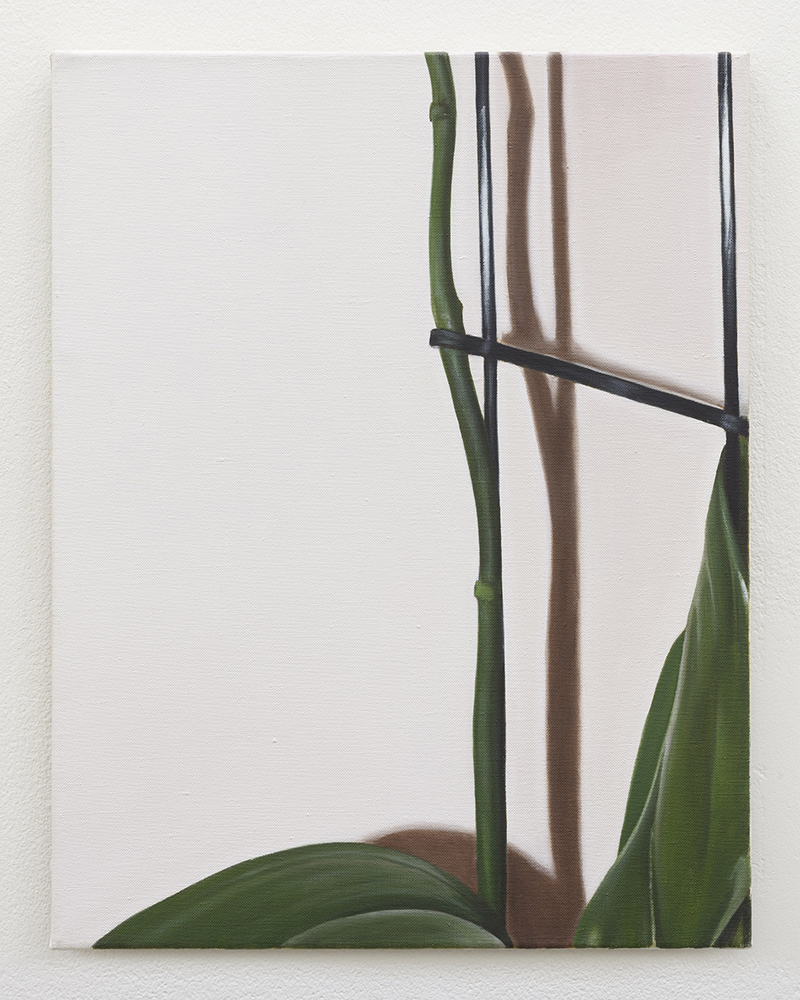 Orchid | oil on linen | 45 x 35 cm | Private collection