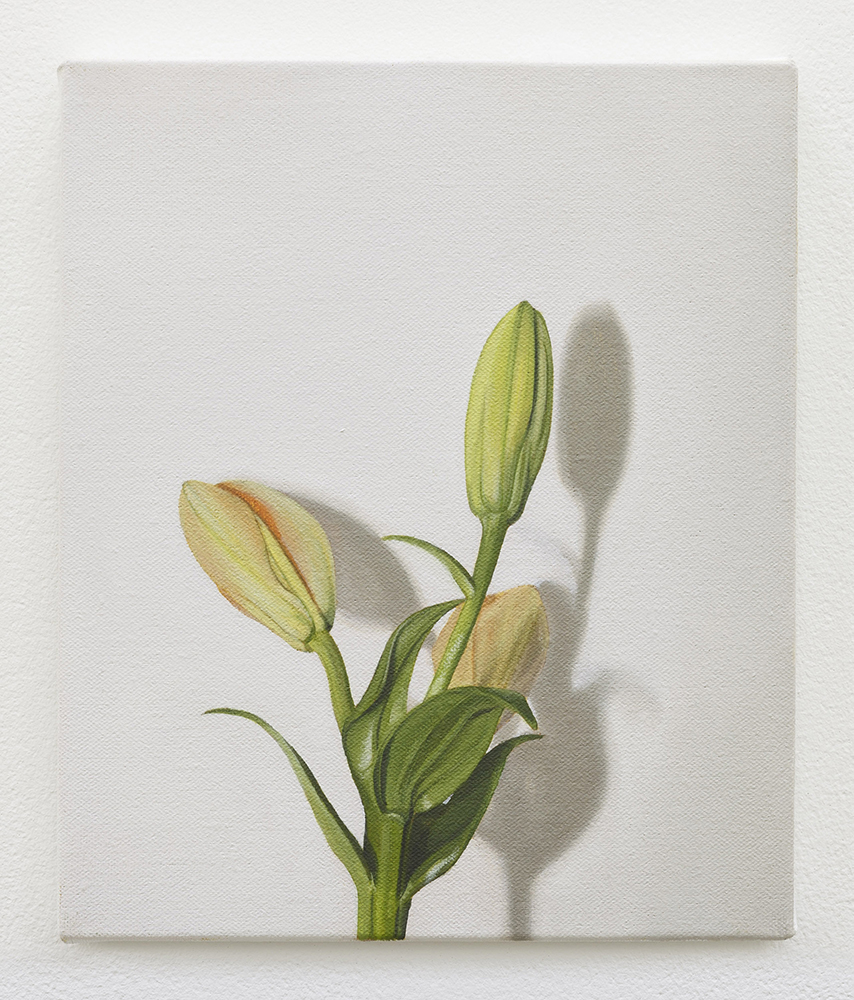 Lily | oil on linen | 30 x 25cm | Private Collection