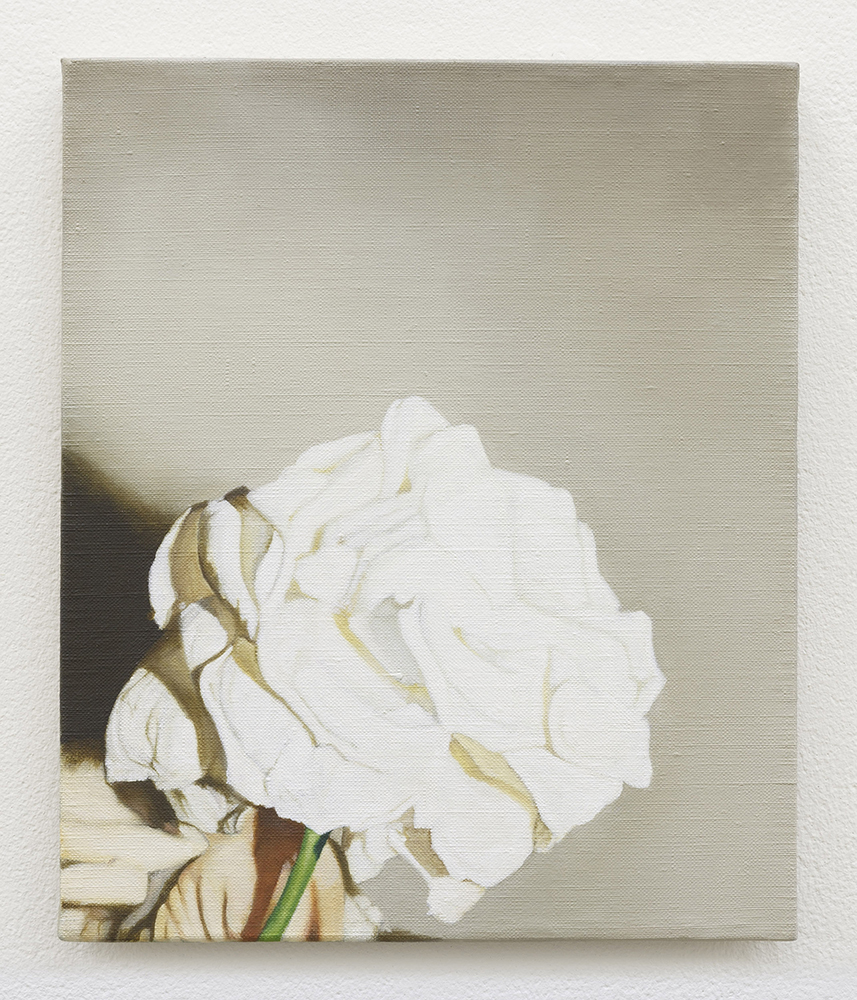 White rose | oil on linen | 30 x 25cm | Private Collection