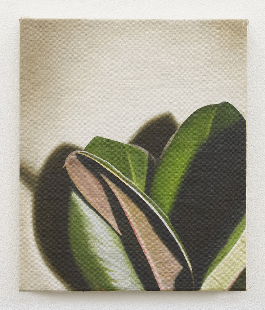 Rubber plant I | oil on linen | 30 x 25cm | Private Collection