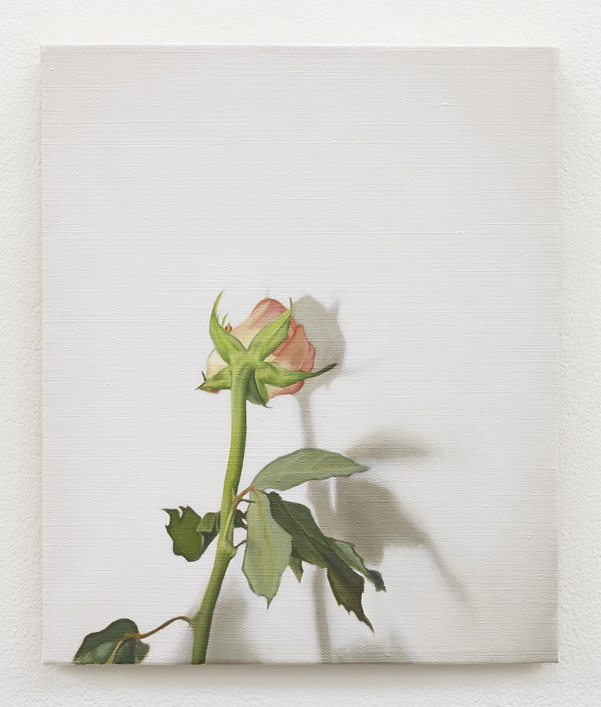 Rose | oil on linen | 30 x 25cm | Private Collection