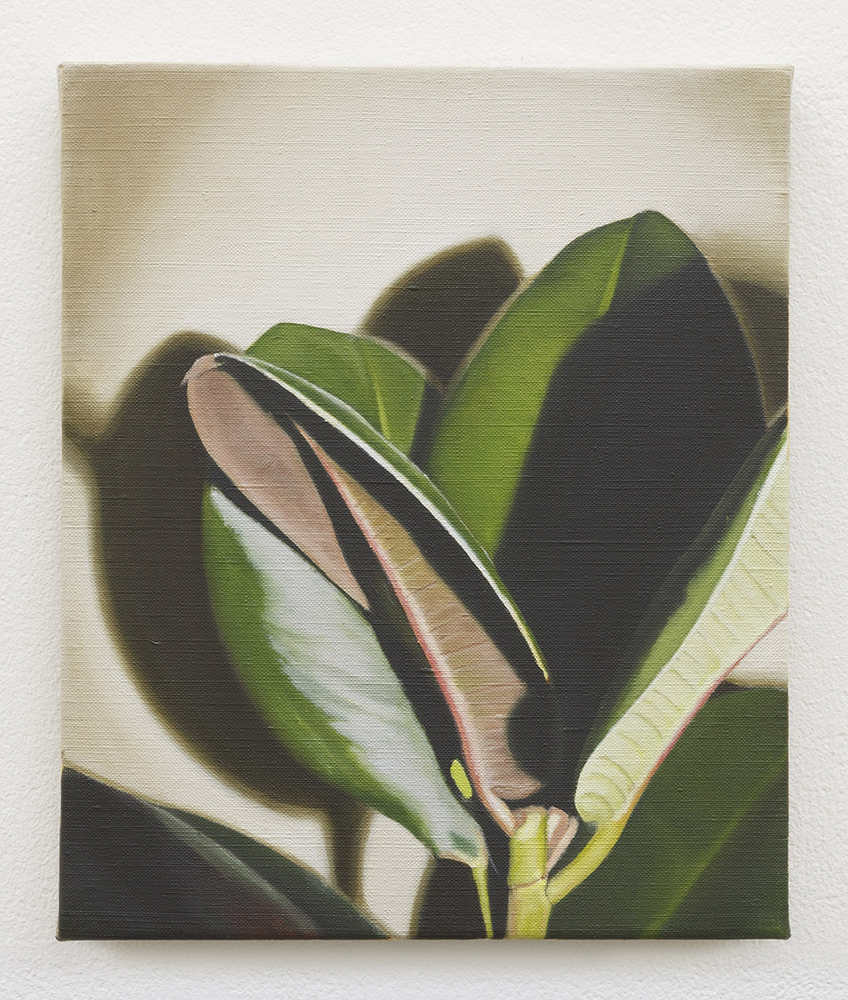 Rubber plant II | oil on linen | 30 x 25cm | Private Collection
