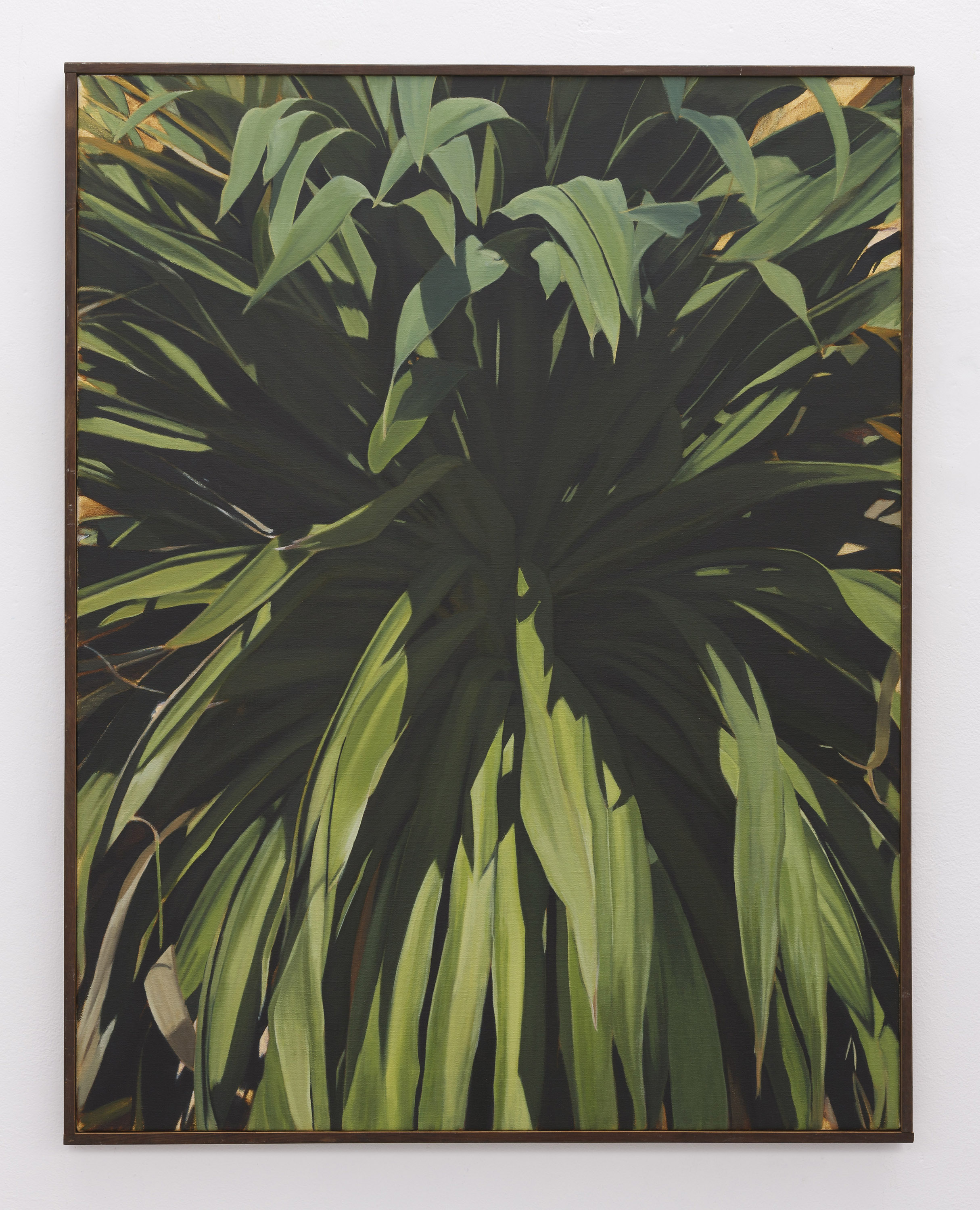 Cordyline | 2018 | oil on linen | 90 x 70 cm | Available