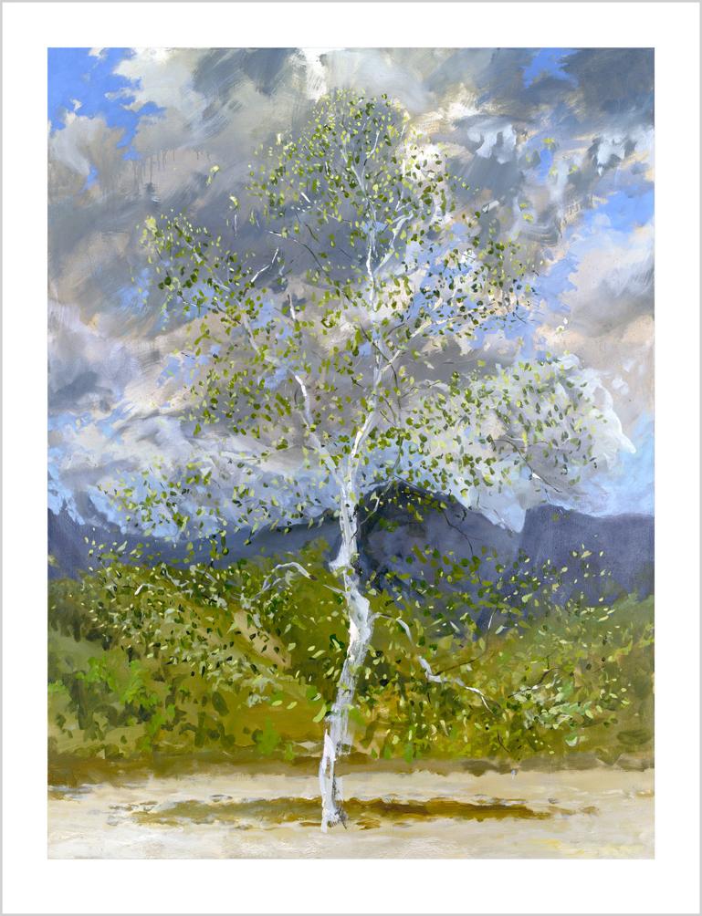 RHLE024 Silver Birch in June Light
