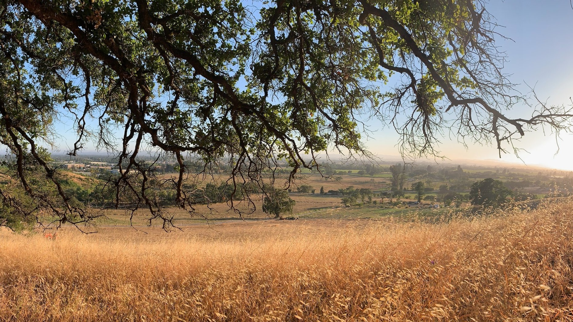 view from the top of Siebert Ranch