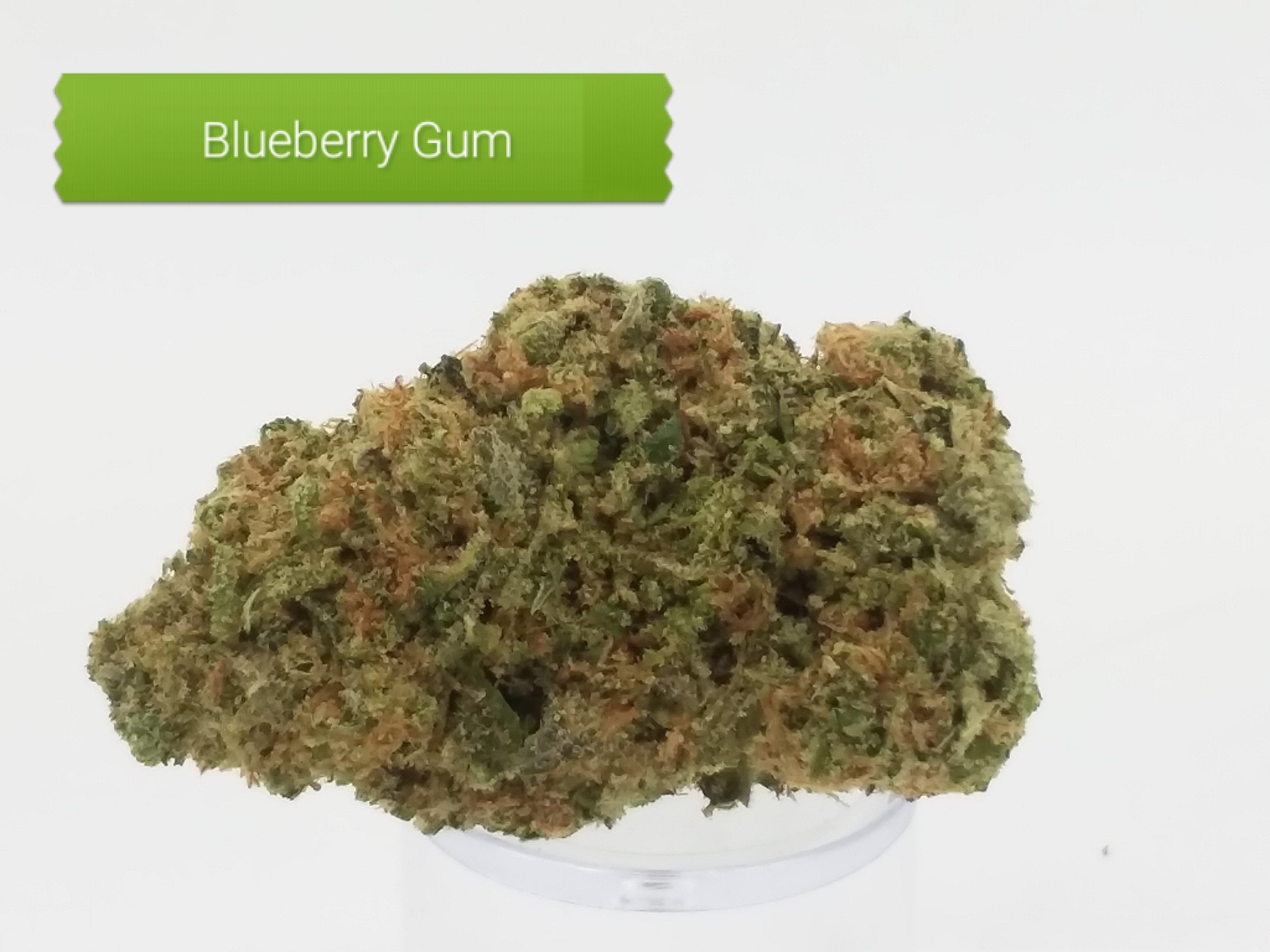 Blue-Gum.jpg