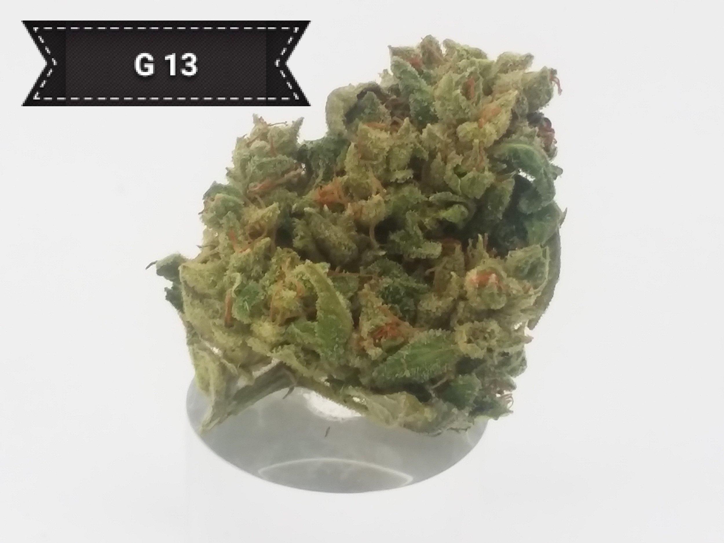 G13.jpg