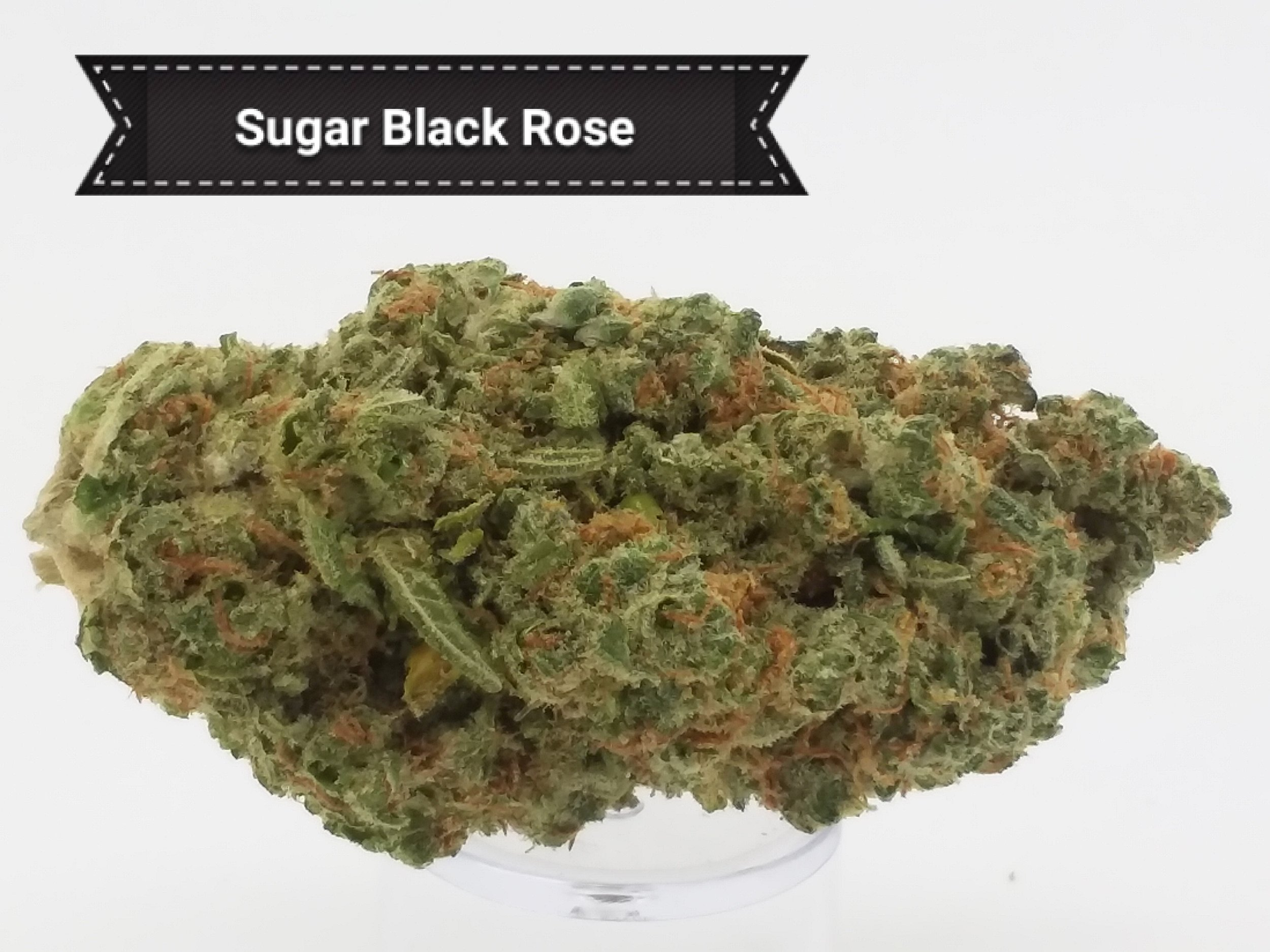 Sugar-Black.jpg