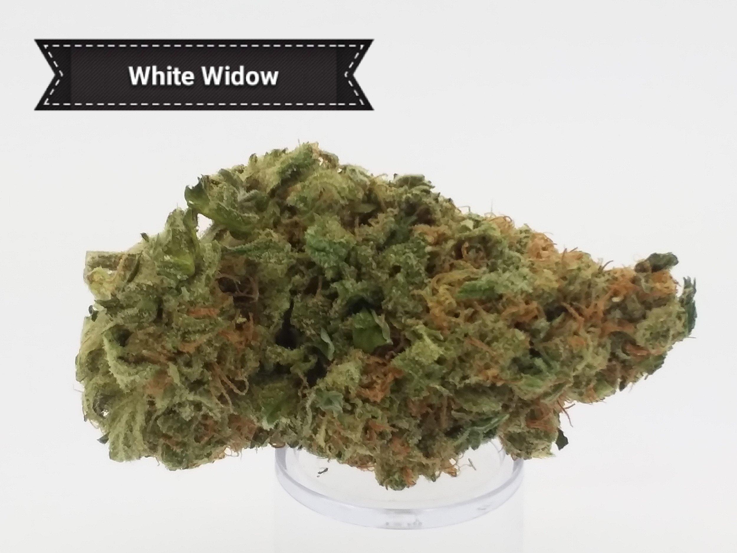 White-Wid.jpg