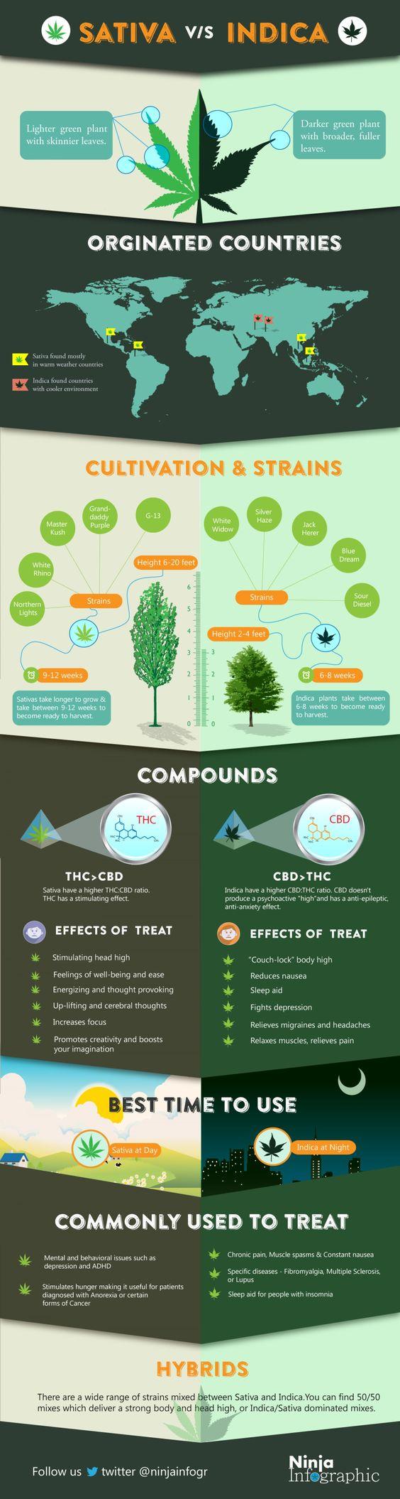 GrassRootsRX-Sativa-vs-Indica-infographic.jpg