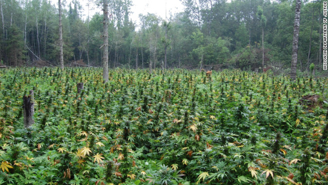 121117050244-marijuana-field-story-top.jpg