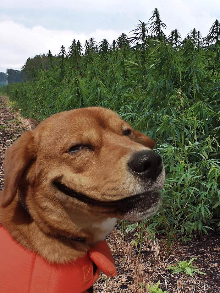 happy-dog.jpg
