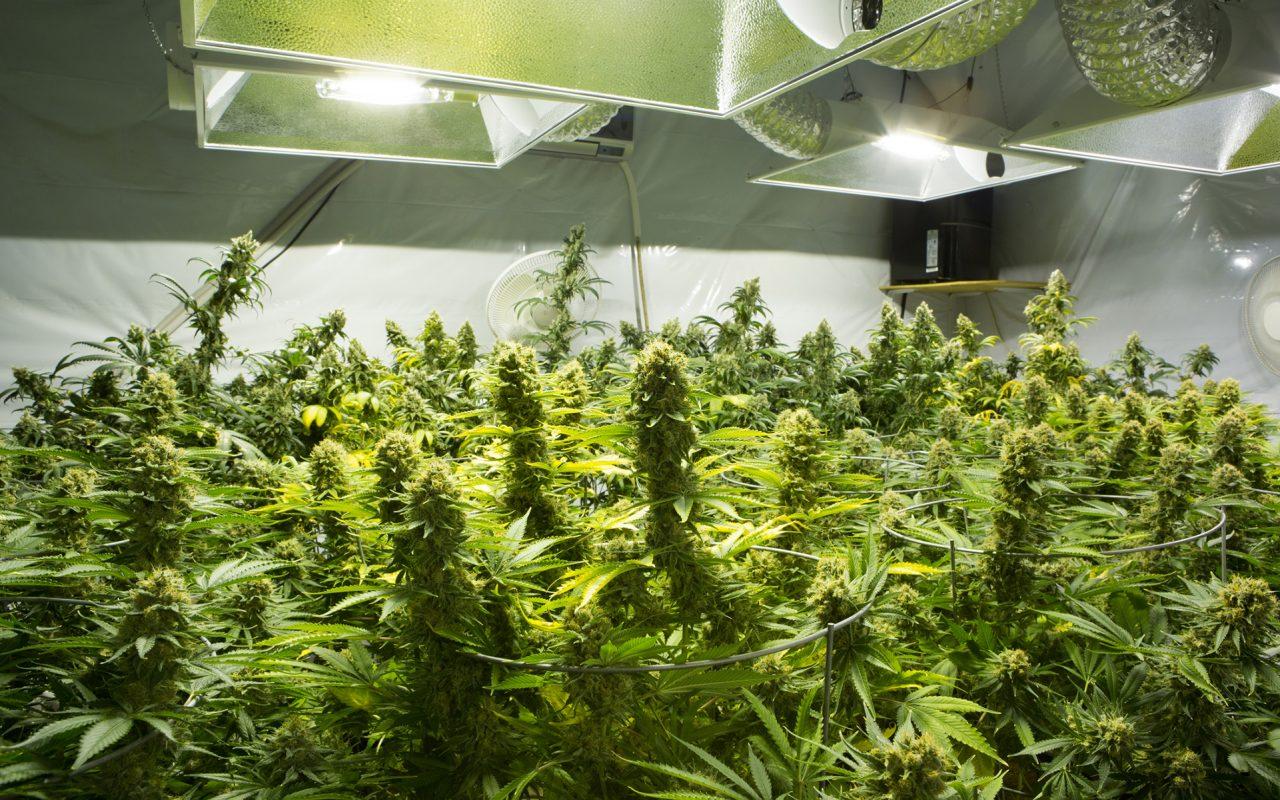 co2-cannabis-3-1280x800.jpg