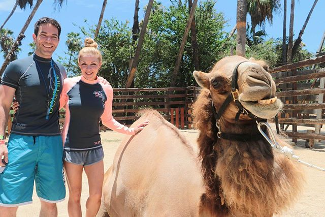 Happy #HumpDay from us & the happiest camel ever!! *Find our why when you swipe left (Her name is Lady Gaga, for real)