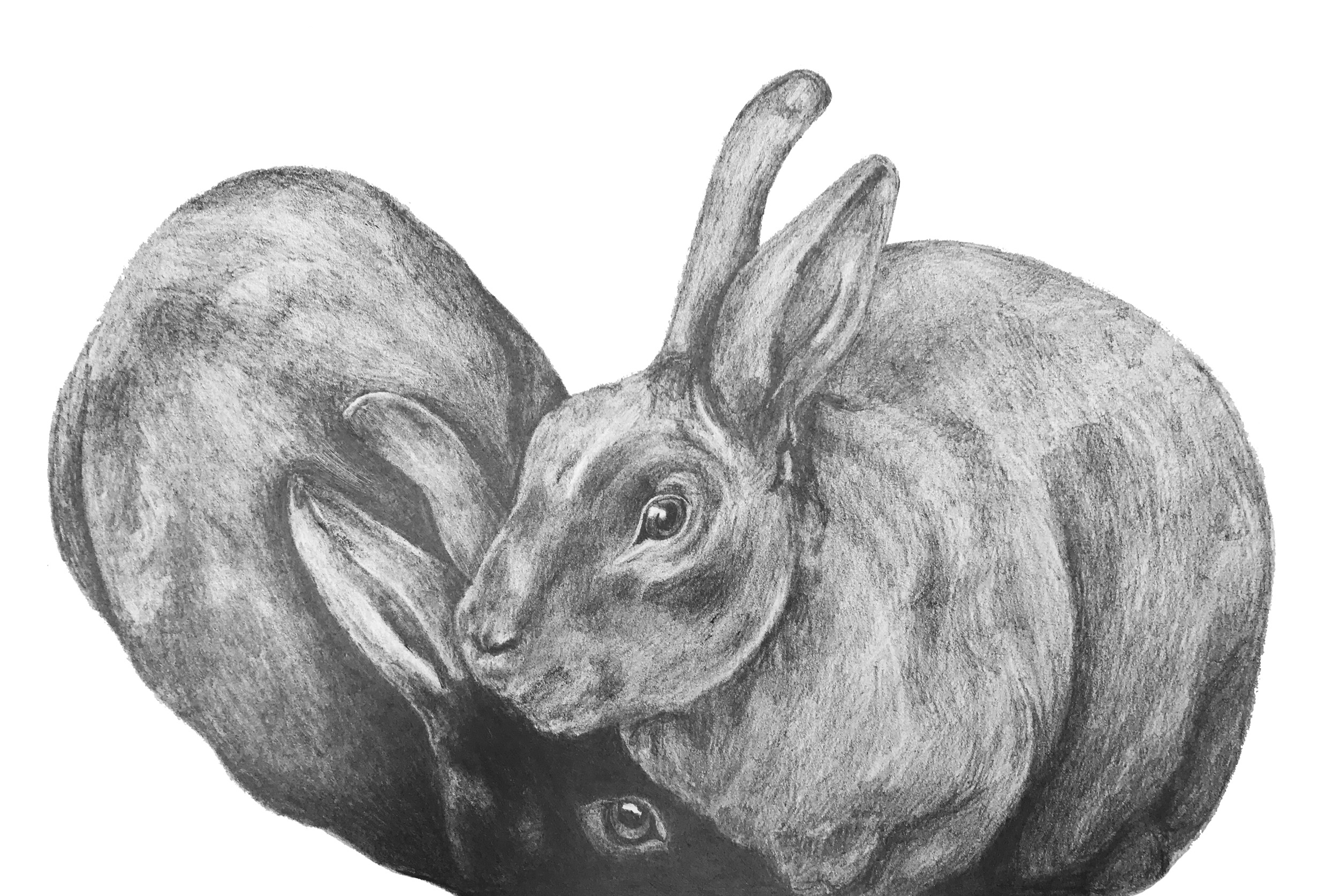 rabbits-commission.jpg