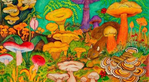 13.DUVAL_GUYLAINE_tout_les_champignons_sont_magiques[4].jpg