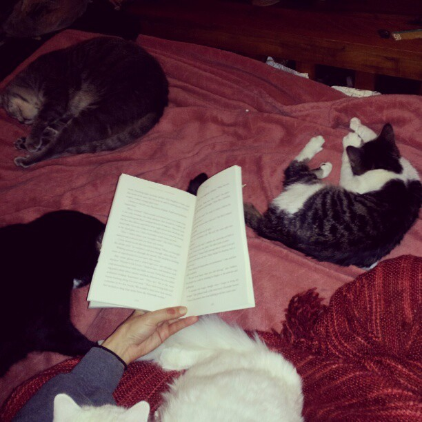 readingblaze.jpeg