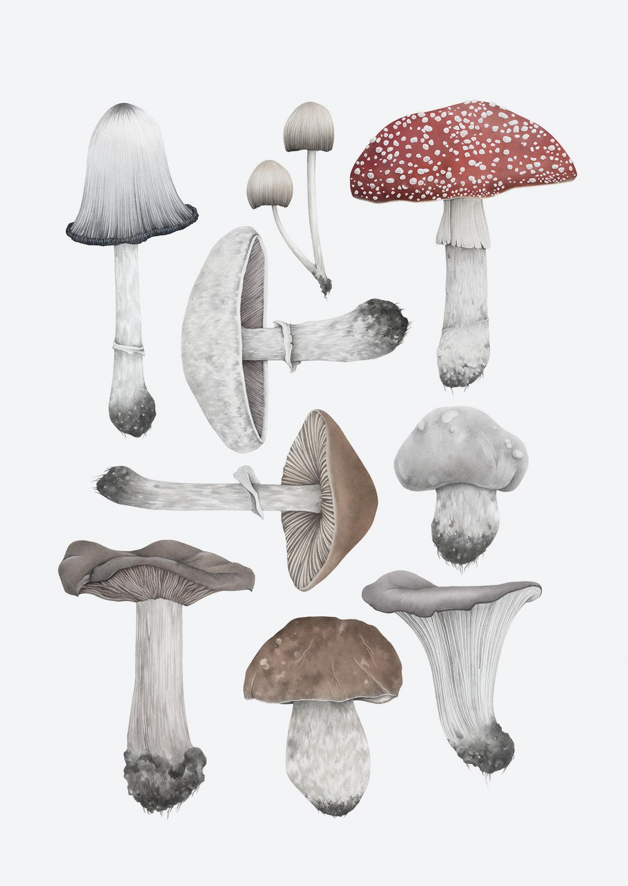 coloured mushrooms a6 rgb grey back.jpg
