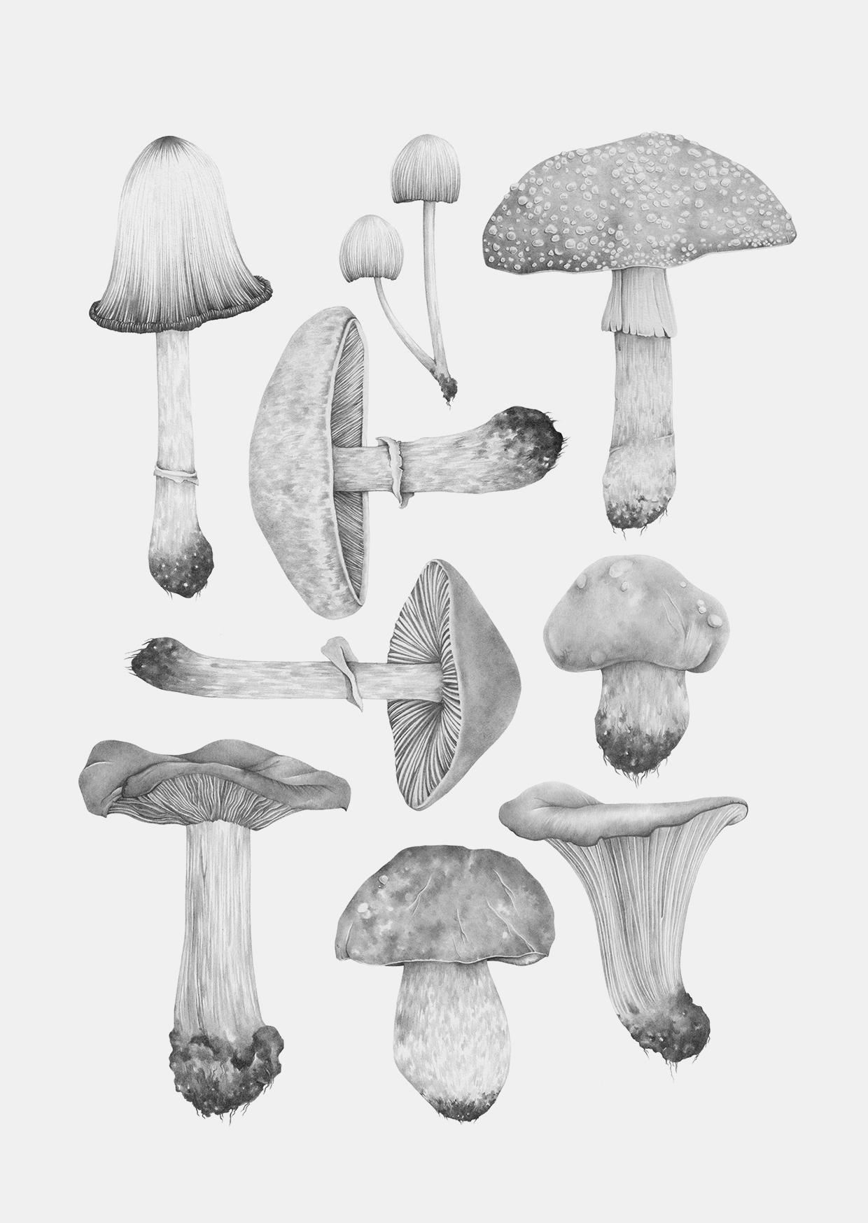 all mushrooms grey a6 grey back.jpg