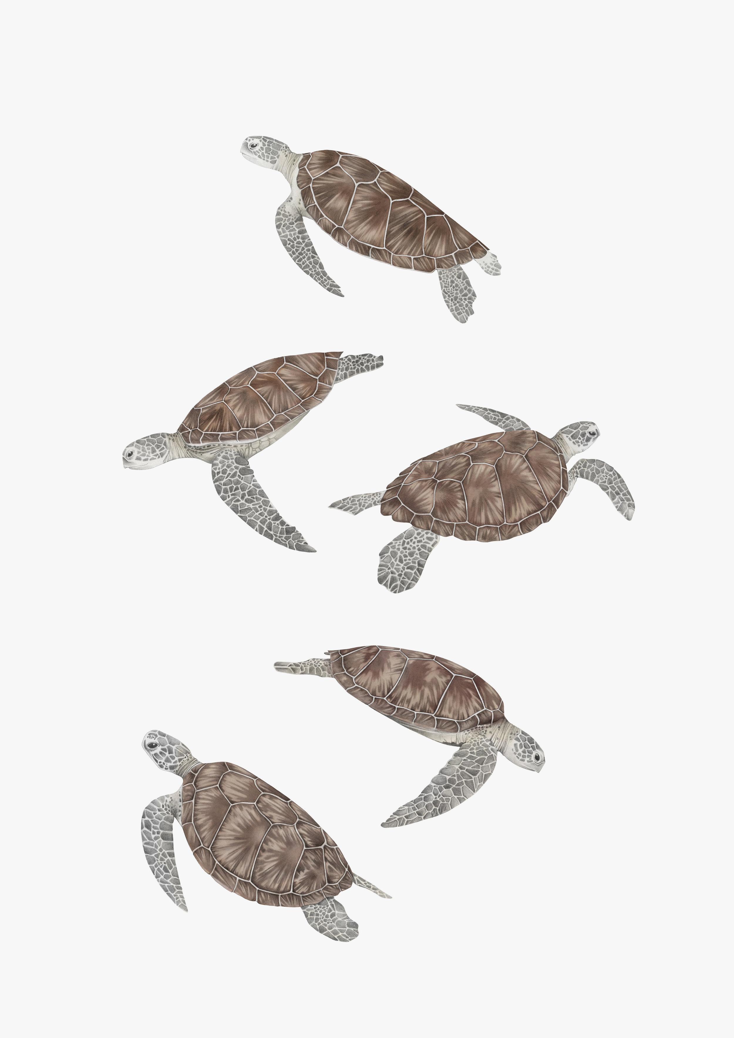 turtles rgb grey back.jpg