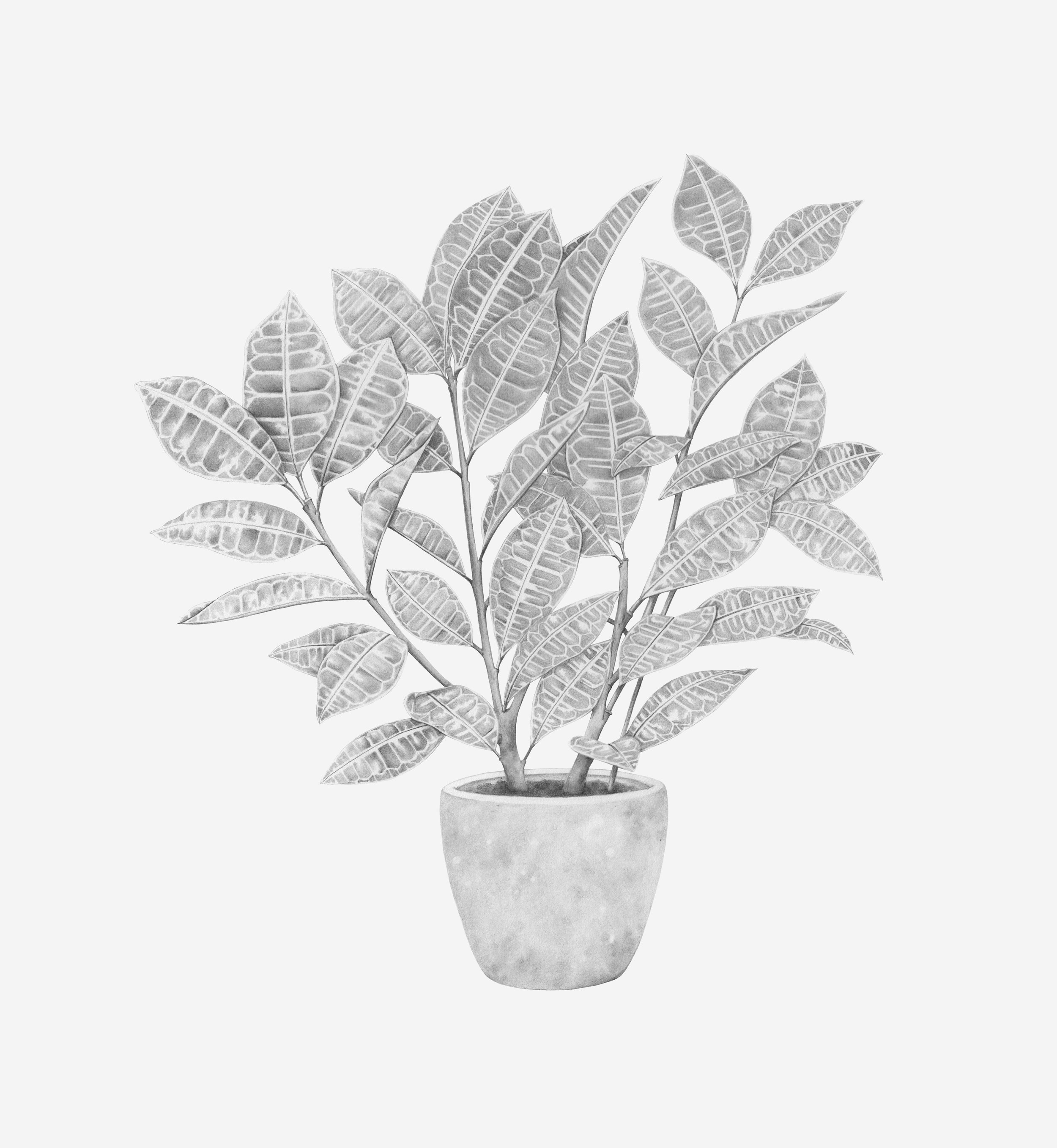 plant pencil grey background rgb.jpg