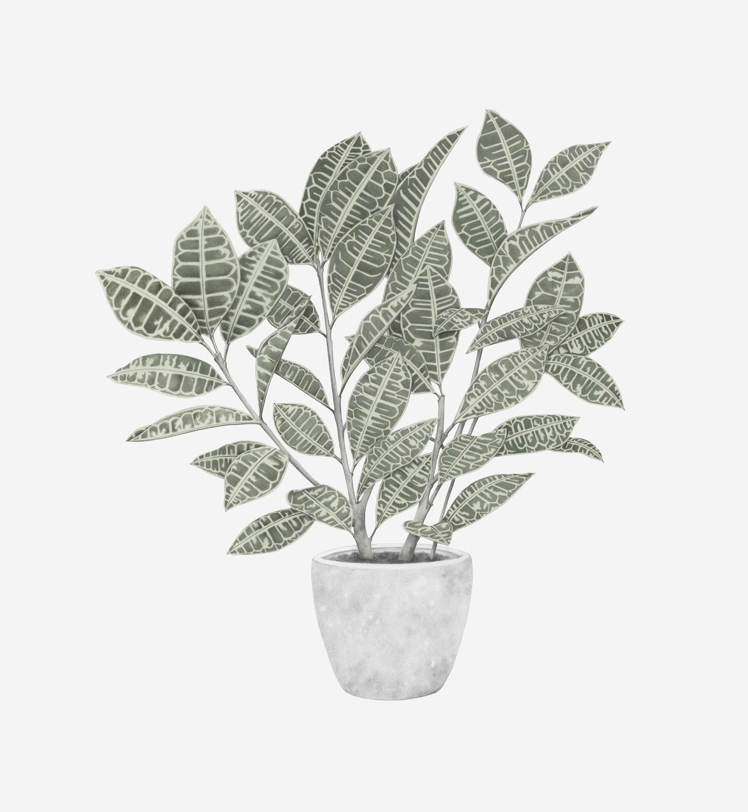 plant grey background rgb.jpg